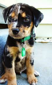 Tiny Non Shedding Dog Breeds by Best 25 Small Dogs Ideas Only On Pinterest Cute Small Dogs