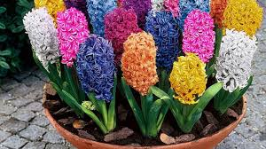 Flowers For Flower Beds by Looking For Beds For Flowers In Your Garden How To Plan