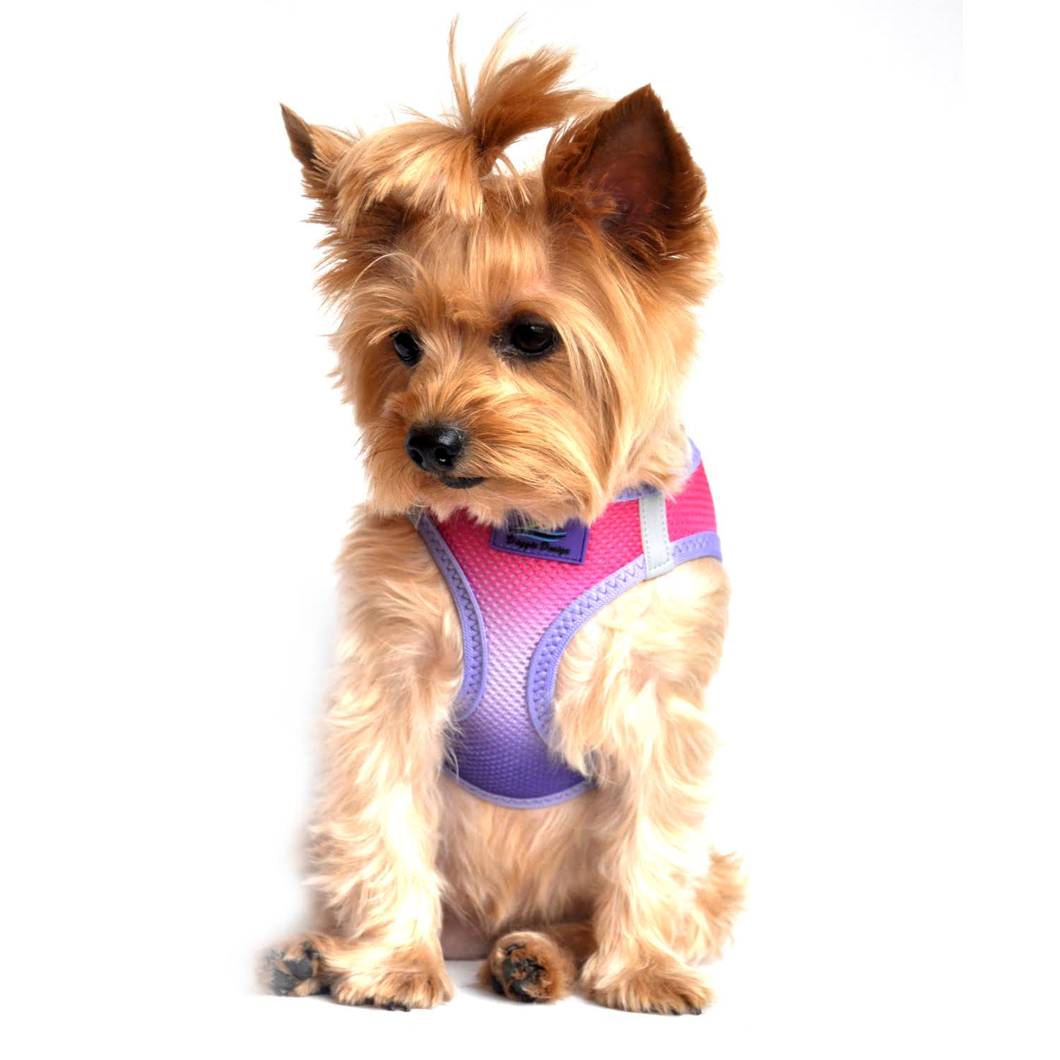 American River Dog Harness Ombre Collection-Raspberry Sundae