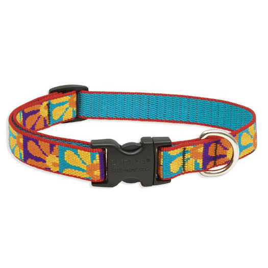 LupinePet Originals Crazy Daisy Adjustable Collar - 3/4in