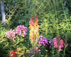 Flowers For Flower Beds by Design A Garden For Flowers All Summer Great Plant List The Old