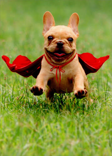 Avanti Press Frenchie Jumping Wearing Red Cape Dog Thank You Card