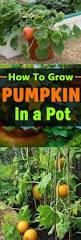 Minecraft Grow Pumpkins Fast by 205 Best Garden Container Images On Pinterest