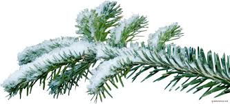 Christmas Tree Species Name by Christmas Tree Branch Png Kanyagiftcenter Com Camo Pinterest