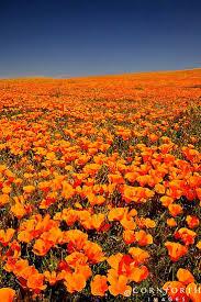 Pumpkin Patch Bakersfield California by Best 25 Orange California Ideas On Pinterest Orange County