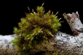 Kinds Of Christmas Trees by Living In The Land Of Mosses Pacific Northwest Pest Management