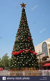 Balsam Christmas Tree Australia by Wa Christmas Tree Stock Photos U0026 Wa Christmas Tree Stock Images