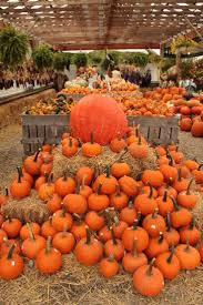 Pumpkin Patch Pueblo County by 253 Best Autumn Images On Pinterest Autumn Fall Fall And Autumn