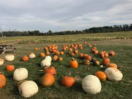 Milford Pumpkin Fest Schedule by Free Kid Friendly October Events In New Jersey