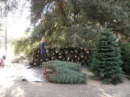 Colorado Springs Christmas Tree Permits by Christmas Trees