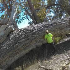 Pumpkin Patch Pueblo County by A Better Tree Service