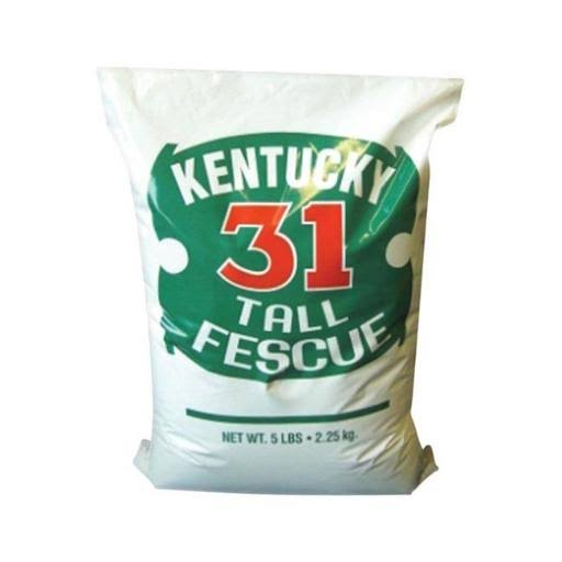 Kentucky 31 Tall Fescue Grass Seed - 5lbs