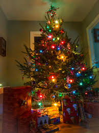 Christmas Tree Has Aphids by In Minnesota Archives Ian A Johnson Life Wildlife Wild Life