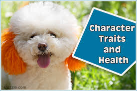 Tiny Non Shedding Dog Breeds by Facts About The Teddy Bear Dog Breed That U0027ll Make You Go Aww