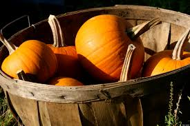 Pumpkin Seed Oil Prostate Side Effects by Pumpkins Improve Prostate Health Huffpost