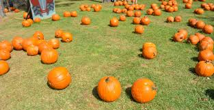 Free Pumpkin Patch Houston Tx by 10 Family Friendly Farms To Visit In Texas U2014 The Titan Adventures