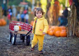 Pumpkin Patch Petting Zoo Dfw by Best Photographic Pumpkin Patches In Orange County Cbs Los Angeles