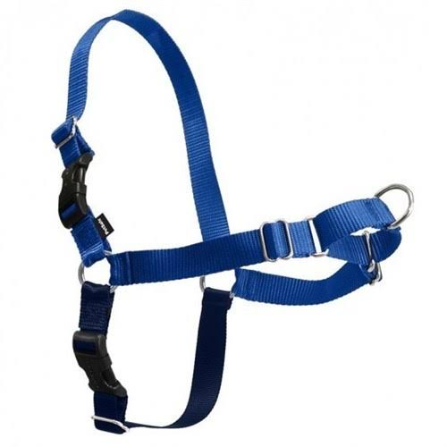 PetSafe Easy Walk Dog Harness - Royal Blue, Medium/Large