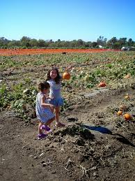Cal Poly Pomona Annual Pumpkin Patch by Petting Zoo Archives Project Refined Life