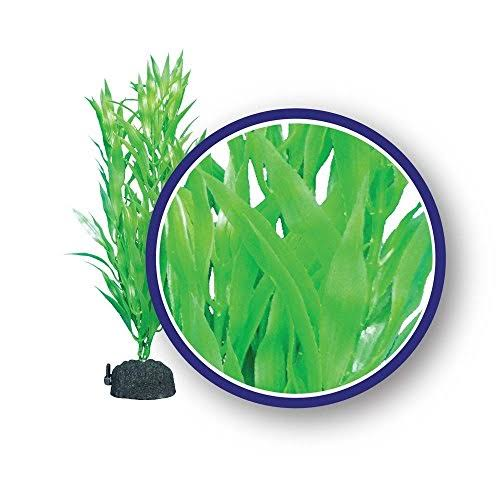 Weco Products Weco Freshwater Series Bamboo Leaf Hairgrass Tropical Aquatic Plants 9 Inches