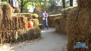 Pumpkin Fest Highwood by Great Pumpkin Fest Youtube