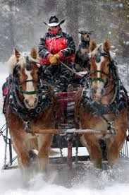 Colorado Springs Christmas Tree Permits by 69 Best Sleigh Ride Images On Pinterest Sleigh Rides Horses And