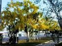 imagem de Dom Macedo Costa Bahia n-22