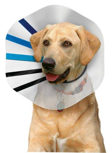 21st Century Inflatable Protective Pet Collar - X-Large