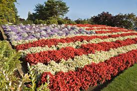 Flowers For Flower Beds by Red White And Blue Flowers For July 4th Plantings
