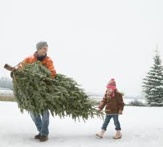 Kinds Of Christmas Trees by The 10 Best Christmas Trees You Can Buy