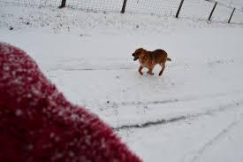 Blue Heeler Shedding In Winter by January 2014 Paradisemtnmusings