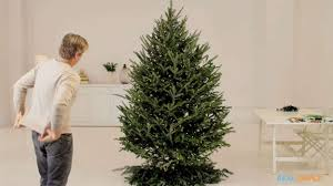 7ft Black Pencil Christmas Tree by How To Put Lights On A Christmas Tree
