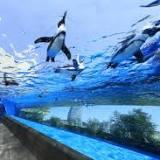 サンシャイン水族館, 小島瑠璃子, サンシャインシティ, 東池袋, 新井美羽, 東京