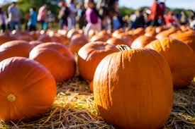 Trinity Pumpkin Patch Baton Rouge by Oc Calendar Of Events Oct 2017 Frank Velasco