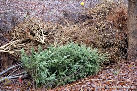 Pea Ridge Christmas Tree Farm by Southern Meadows On Creating A Brush Pile