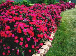 Flowers For Flower Beds by Garden Smallflower Apothecary Catalog Flower Orders Online Usa