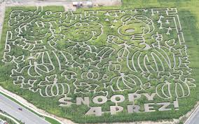 Pumpkin Patch Bakersfield California by A Maize Ing Halloween Corn Mazes Celebrate 50 Years Of It U0027s The