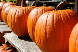 Milford Pumpkin Fest Schedule by Oradell New Jersey Official Website Of The Borough Of Oradell