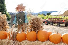 Pumpkin Patch Petting Zoo Dfw by Halloween Fruit Cups Recipe Halloween Fruit Fruit Cups And