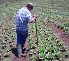 España es el país de la región que pierde más terreno para la explotación agrícola
