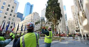 Christmas Tree Amazonca by Rockefeller Center Christmas Tree Arrives In Nyc