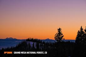 Colorado Springs Christmas Tree Permits by Grand Mesa National Forest Outthere Colorado