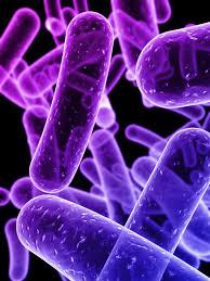 Peranan Nutrisi Dalam Metabolisme Mikroba
