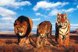Wildlife Tour Packages From Delhi Car Taxi Hire, Car Hire For Wildlife Tour Packages, Wildlife Tour Packages From Delhi Hire Car and Driver, Golden Triangle With Wildlife Tour Packages From Delhi Hire Car and Driver | Golden Triangle Tour| Golden Triangle Delhi Agra Jaipur, Golden Triangle Tour From Delhi - Golden Triangle Delhi Agra Jaipur Tour - Golden Triangle Tour From Delhi By Car - India Golden Triangle Tour - Golden Triangle Taj Mahal Tour - Golden Triangle Weekend Tour - Golden Triangle Holidays Tour - India Delhi Holiday Tours - Delhi short Tour Packages - Tour Packages From Delhi - Delhi Agra Jaipur Tour - Agra Taj Mahal Tour From Delhi - Same Day Agra Tour - Same Day Taj Mahal Tour - Taj Mahal Tour From Delhi By Car - Car Rental From Delhi To Agra - Golden Triangle Agra Taj Mahal Tour Packages - Golden Triangle Tour From Delhi - India Golden Triangle Tour - Golden Triangle Delhi Agra Jaipur Tours, Unique Holiday Trip, Car Hire in Delhi, Carhireindelhi