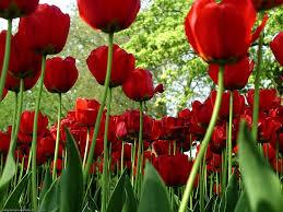 flores_rojas-1024x768-14815.jpeg